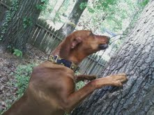 Biscuit and the Oak Tree
