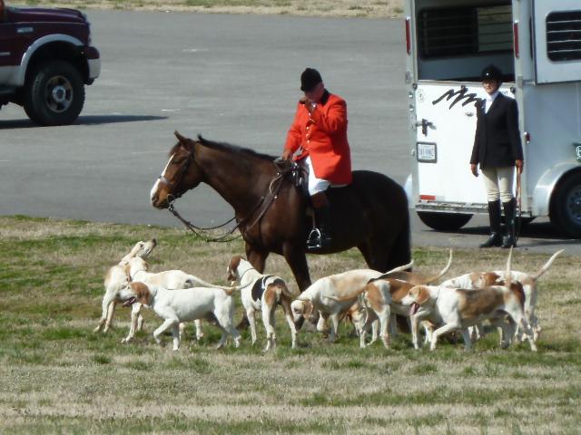Blog.Horse & Hounds
