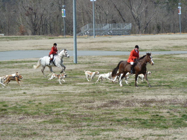 blog.hounds